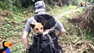 Guys Hike For Hours To Save Dog When Everyone Said It Couldn