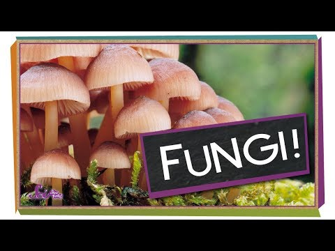 Fungi: Why Mushrooms Are Awesome | Biology for Kids