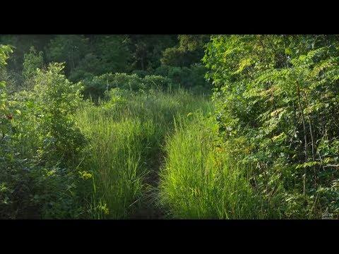 Listen to Howard Fox's 'Scenes in the Greenbelt'