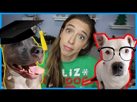 Testing My Dogs' IQs!