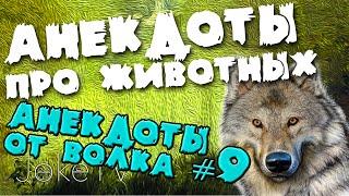 Анекдоты про животных. Анекдоты от Волка #9