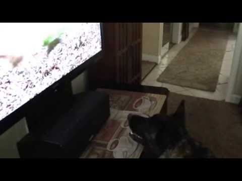 Pepper Watches DOG TV