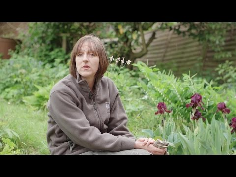 Make a mini garden in your paving: RHS Greening Grey Britain