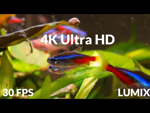 4K Ultra HD: Tropical Fish Aquarium