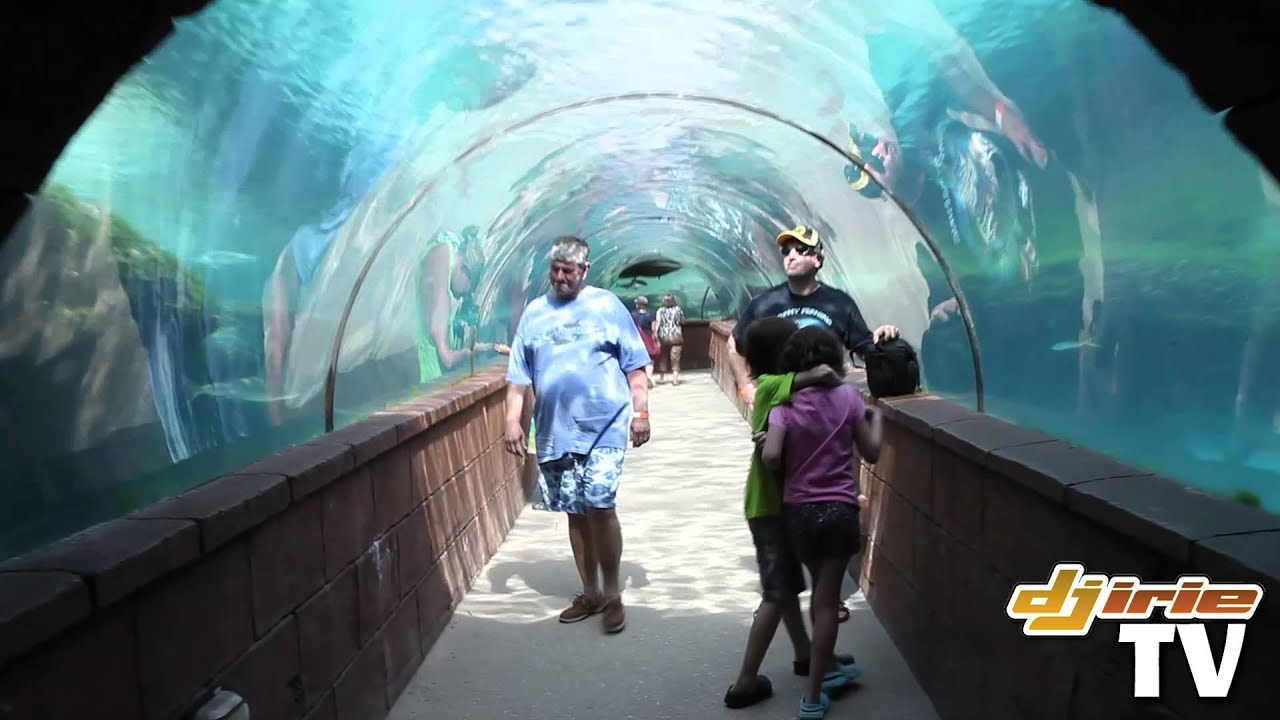 Atlantis Resort Paradise Island Aquariums Fish & Sharks Bahamas