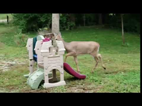 Big Mike - Deer does Phil Collins Drum Solo!