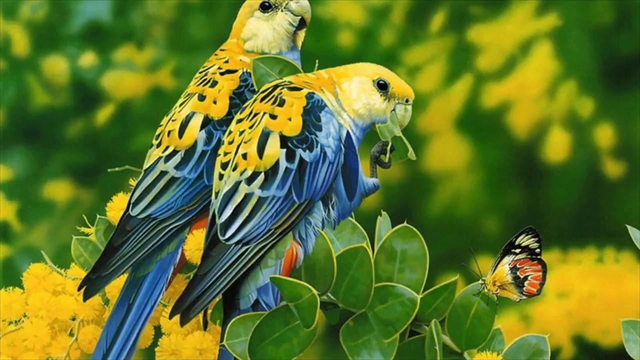 Love Birds Images Wallpaper