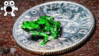 Top 10 Miniature Pets You Won't Believe Exist