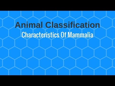 Characteristics Of Mammalia