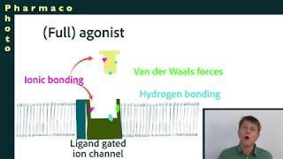 Cellular receptors part 3: agonists, inverse agonists, antagonists