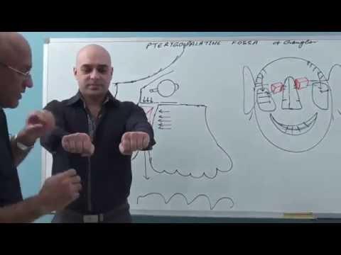 Pterygopalatine Fossa - Gross Anatomy