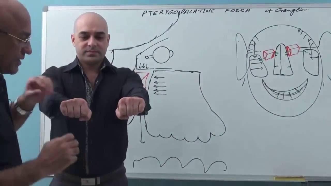 Pterygopalatine Fossa - Gross Anatomy - YouTube