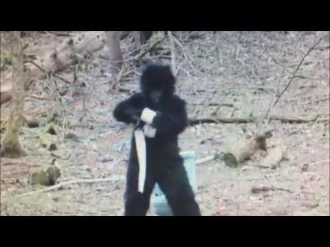 Review-  Butchy Kids Bigfoot Videos,  Blindingly Dumb