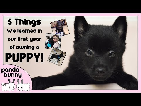 5 Things We Learned In Our First Year of Owning a Puppy! | PandaBunny