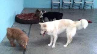 Dallas & Dakota At Dog Day School 2!