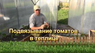 Подвязывание томатов в теплице(Забыл отметить, что лучше обвивать томат вокруг веревки в вечернее время, т.к. именно вечером томат более..., 2016-05-16T10:12:03.000Z)