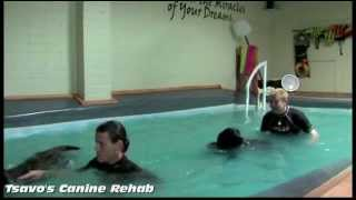 Tsavo's Canine Rehab Fitness Center (full)