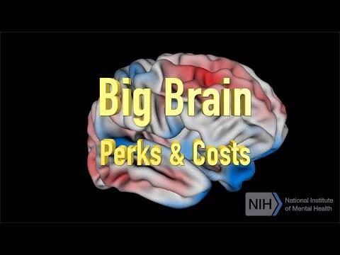 Big Brain - Perks & Costs