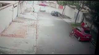 Video: un hombre salva a un niño del ataque de un pitbull