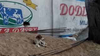 funny dog | rural dog | street dogs | cute dogs | puppy |dog | slum dog | كلاب مضحكة |Funny Everyday