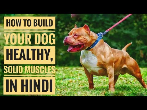 How To Build Healthy, Solid Muscles On Your Dog In Hindi.