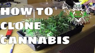 Cloning Documentary: Clone Cannabis at Home | Step by Step Guide to Taking Marijuana Clones thumbnail