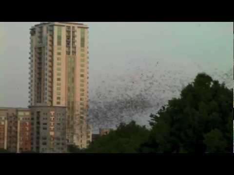 2 MILLION BATS Austin Texas