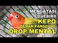 Cara Mengatasi Lb Kepo Demam Panggung Dan Drop Mental Di Gantangan  Mp3 - Mp4 Download