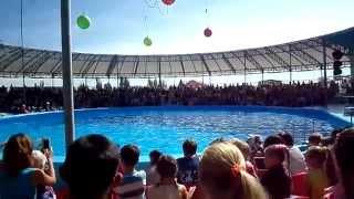 ДЕЛЬФИНАРИЙ НЕМО БЕРДЯНСК ЧАСТЬ 1 Dolphinarium Nemo BERDYANSK PART 1