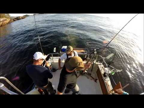 Sunset Charters Rupert Fishing