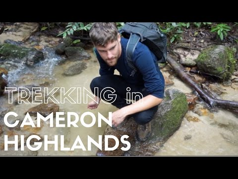 THREE MONTHS OF TRAVEL/Exploring Cameron Highlands