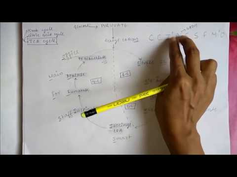 Krebs Cycle,TCA Cycle or Citric Acid Cycle Trick - Learn With Simplied Steps in Hindi