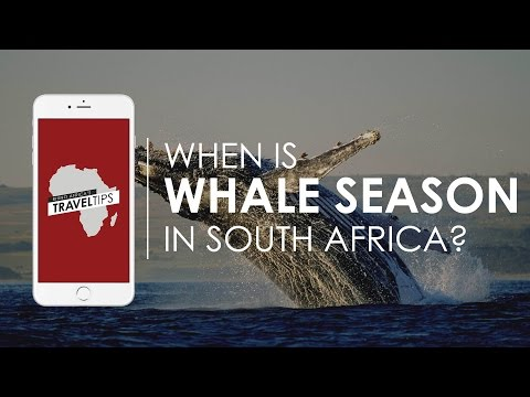 When is whale season in South Africa? Rhino Africa's Travel Tips