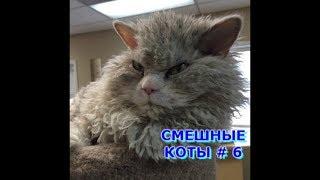 Приколы с кошками и котами #6. Подборка смешных и интересных видео с котиками и кошечками 2017