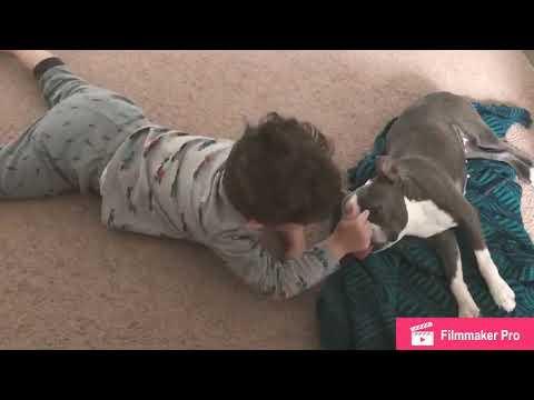 My Nephew & his Legendary Terrier