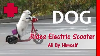 Funny Dog Video Riding A Scooter