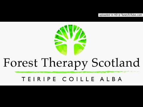 BBC Radio Scotland Interview: Forest Therapy with certified guide Caitlin Keddie