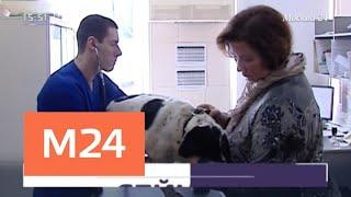 Где в Москве можно привить от бешенства собаку или кошку - Москва 24