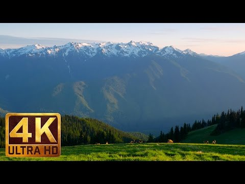 Nature Relax Video in 4K UHD (2 hours video) - Hurricane Hill Trail, Olympic Peninsula