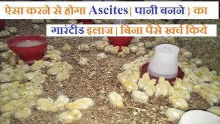 मुर्गियों में Ascites{ पानी बनने } का इलाज crd, ecoli and growth promoter in poultry
