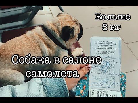 Как лететь с собакой больше 8 кг в салоне самолёта