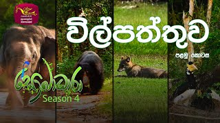 Sobadhara - Sri Lanka Wildlife Documentary | 2020-07-10 | Wilpattu National Park (විල්පත්තුව) Thumbnail