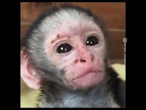 Uykusu Gelen Tatlı Maymun Youtube