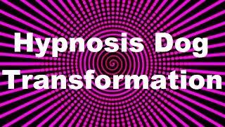 Hypnosis Dog Transformation