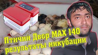 Результаты Инкубации Птичий Двор MAX 140