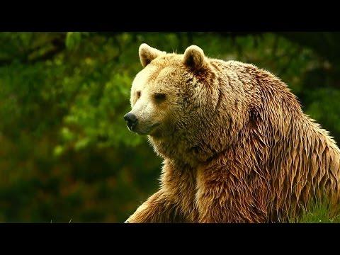 Unedited Footage Of A Bear Infomercials Adult Swim