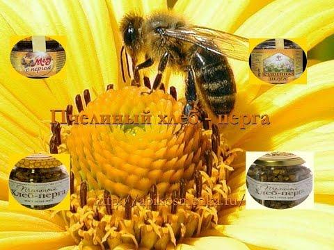 Перга пчелиная – что это такое и как с её помощью избавиться от «всех болезней»