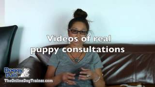 The Online Dog Trainer From Doggy Dan4