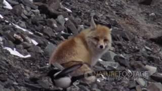 Забавные кадры с животными  Приколы с дикими животными