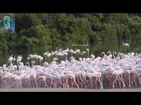 Ras al Khor Wildlife Sanctuary | flamingos | Dubai Ding Dong | D3
